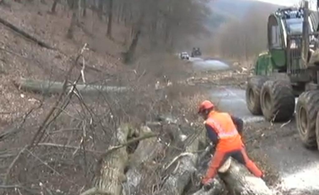 Na cyklotrase medzi Veľkým Šarišom a Prešovom začali s výrubom stromov.